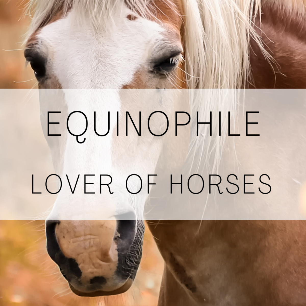 Equinophile, a lover of horses