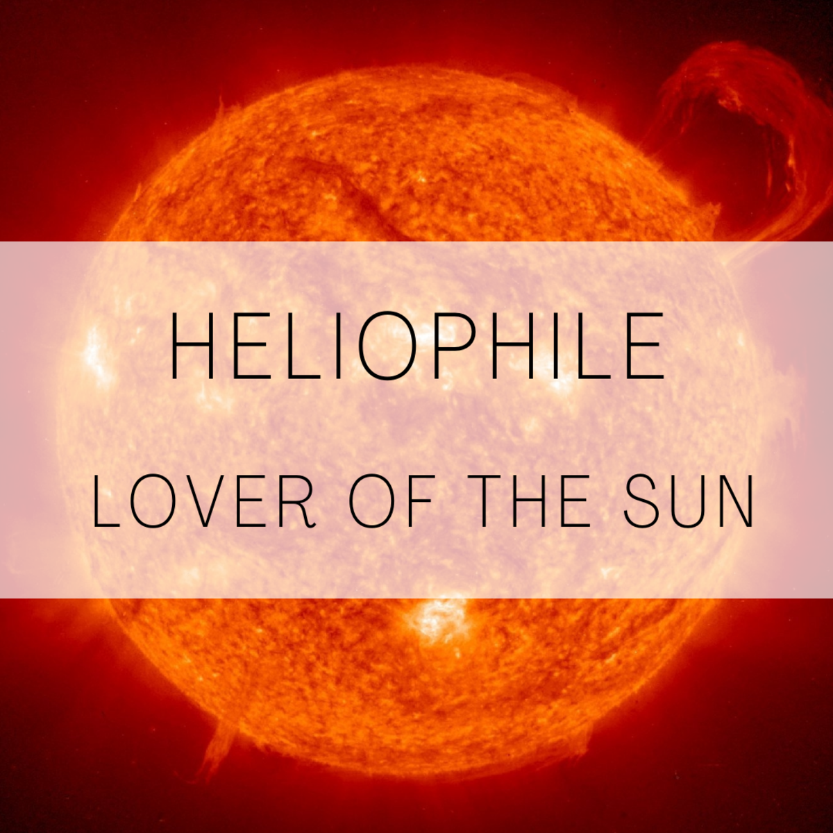 Heliophile, a lover of the sun