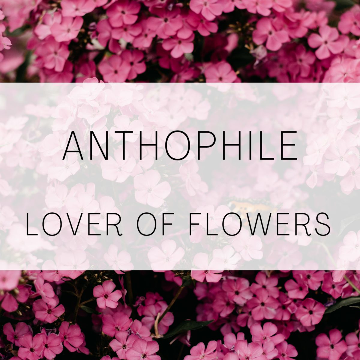 Anthopile, a lover of flowers