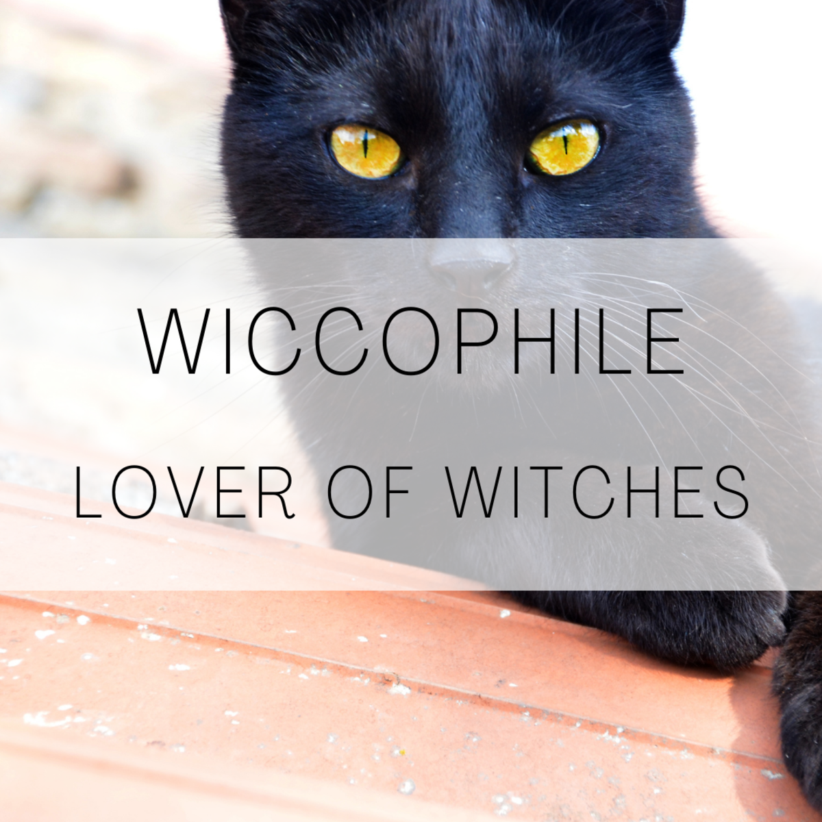 Wiccophile, a lover of witches