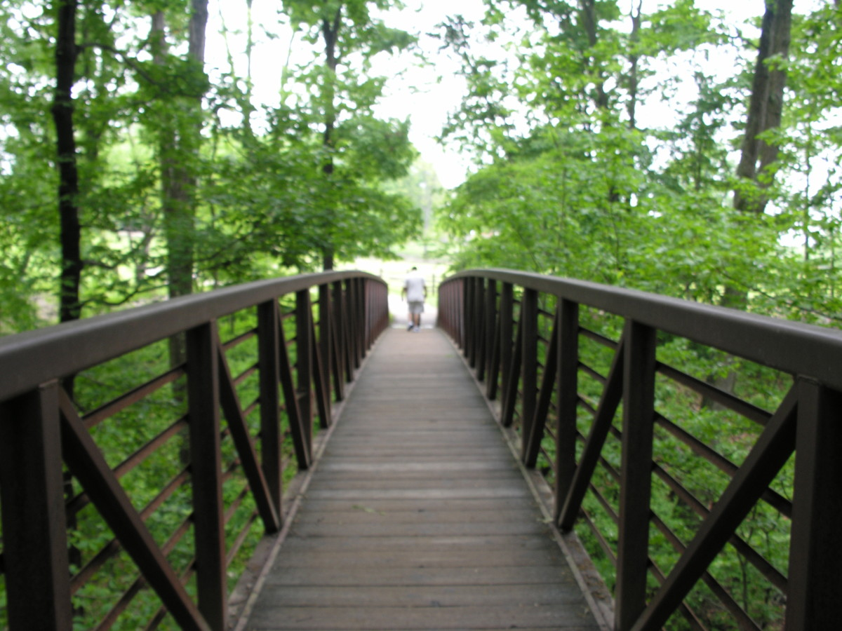 A footbridge in a wooded area of the Mount Vernon Estate. August 2013.