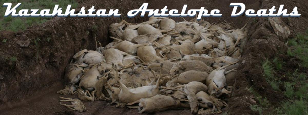 top-10-strange-mass-animal-deaths