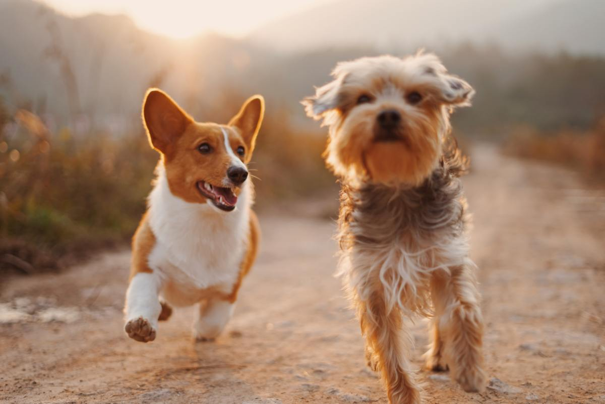 5-most-important-things-to-teach-your-dog-right-now