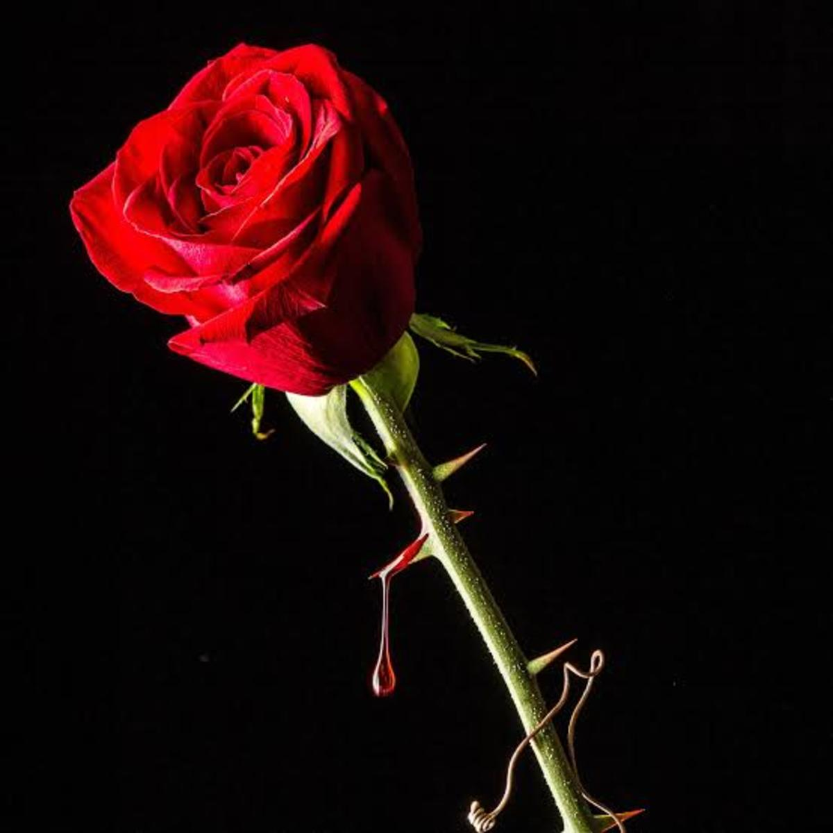 Life is a bed roses, but roses have thorns.