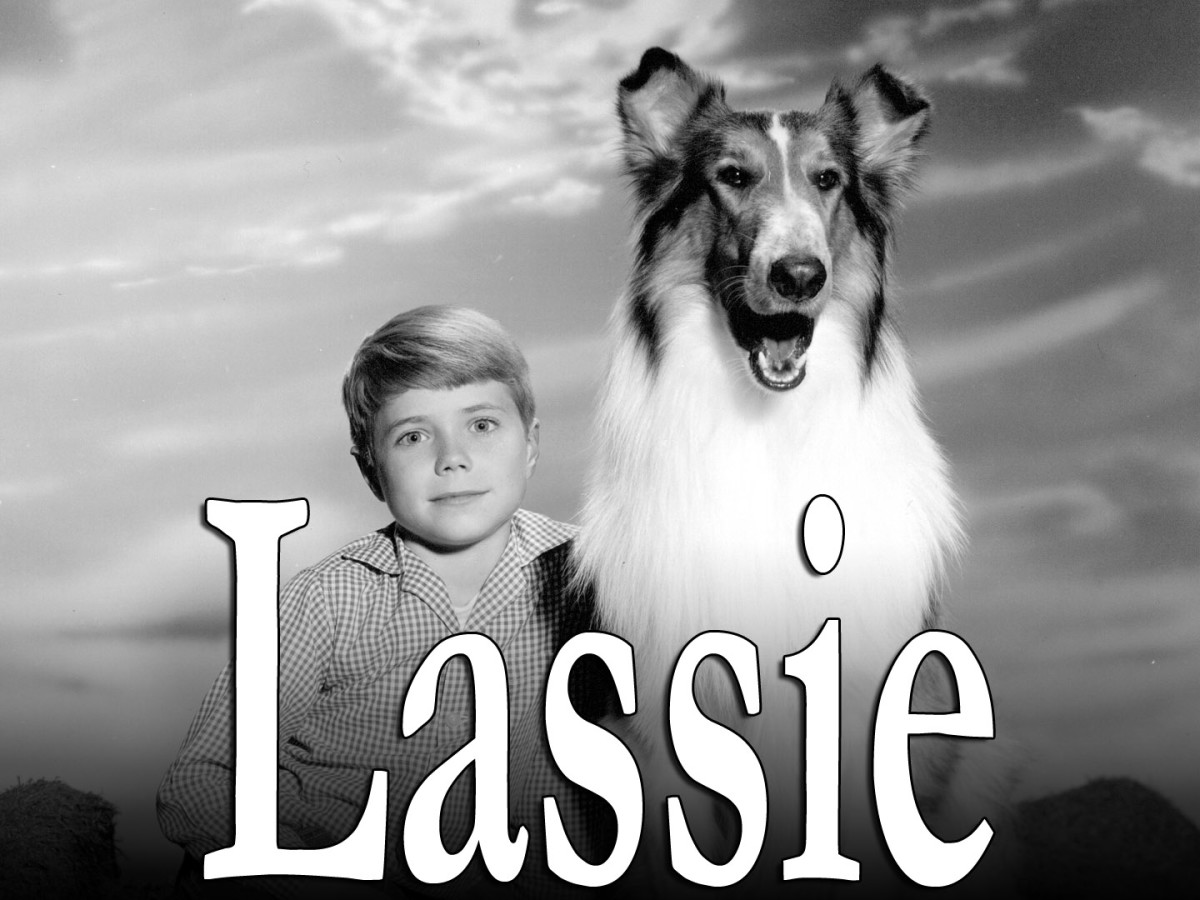 Pal's Son played Lassie in the television program. Here he is with Timmy.