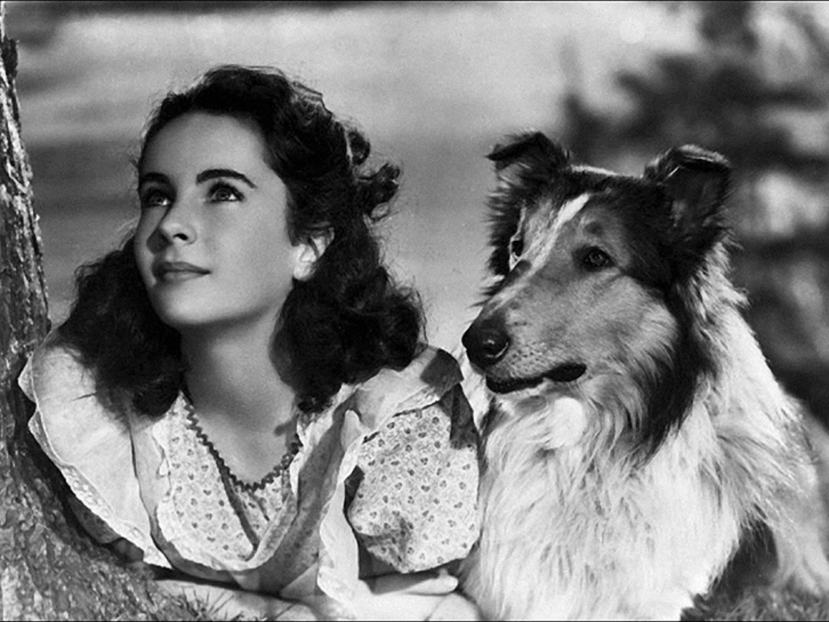 Elizabeth Taylor with Pal, who played Lassie in the motion picture Lassie Come Home