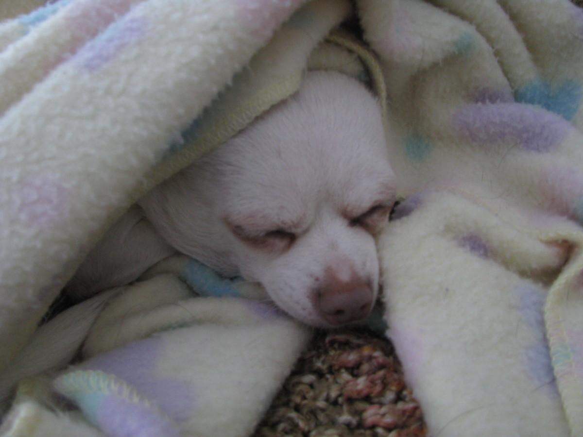 Taloola with her favorite dog blanket