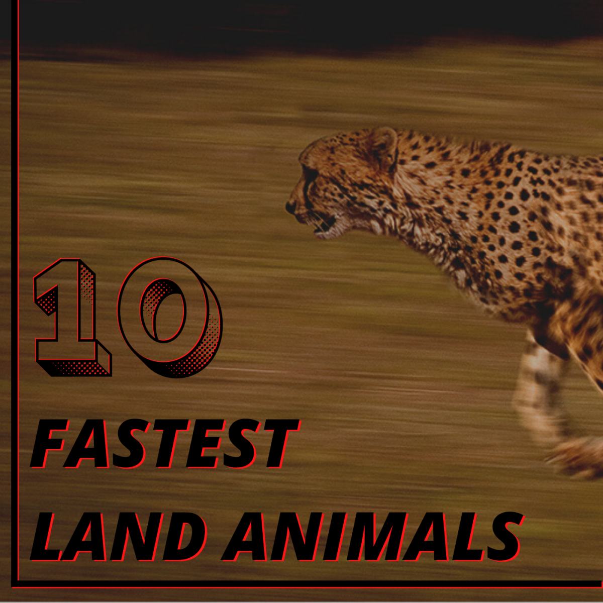These 10 animals are the fastest sprinters (and in some cases, hoppers) in the world.