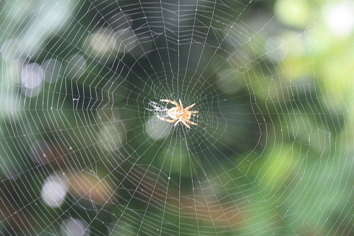 Cobwebs do not bother the lives around them.