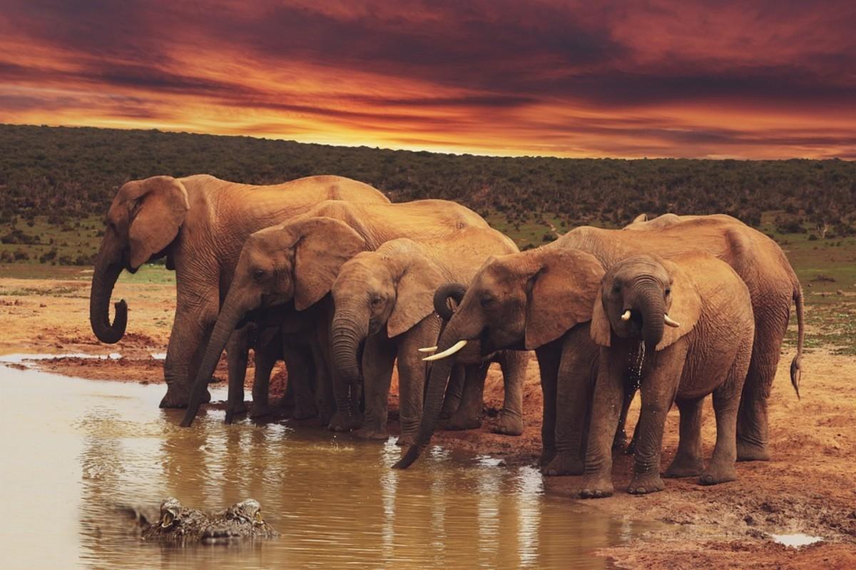 elephant-folklore