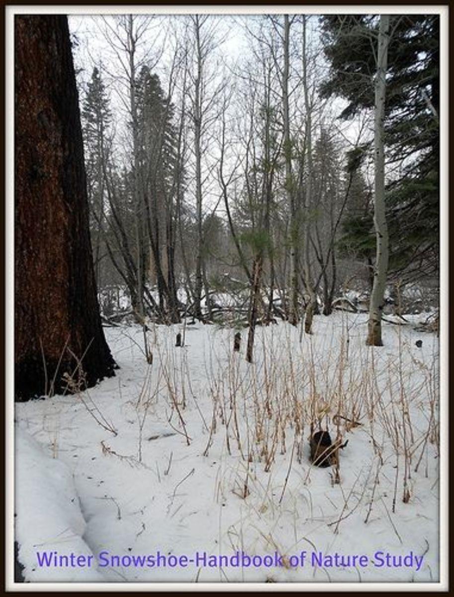 Peaceful Winter Woods