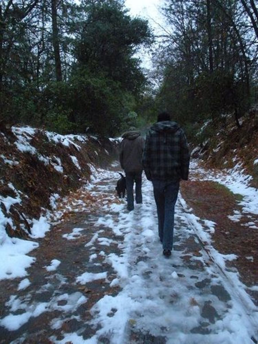 Family Hikes in the Snow