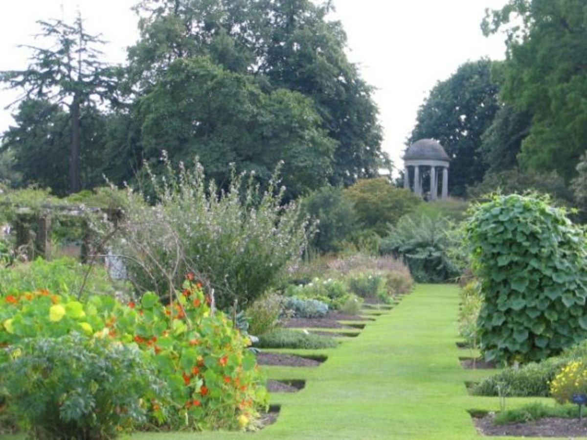 The Order Beds at Kew Gardens in August