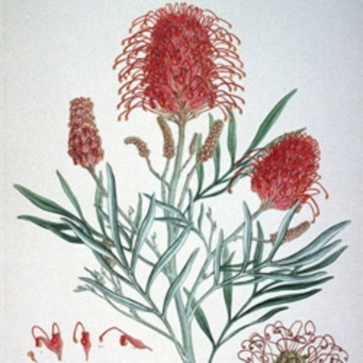 Makingamark's Botanical Art Compendium