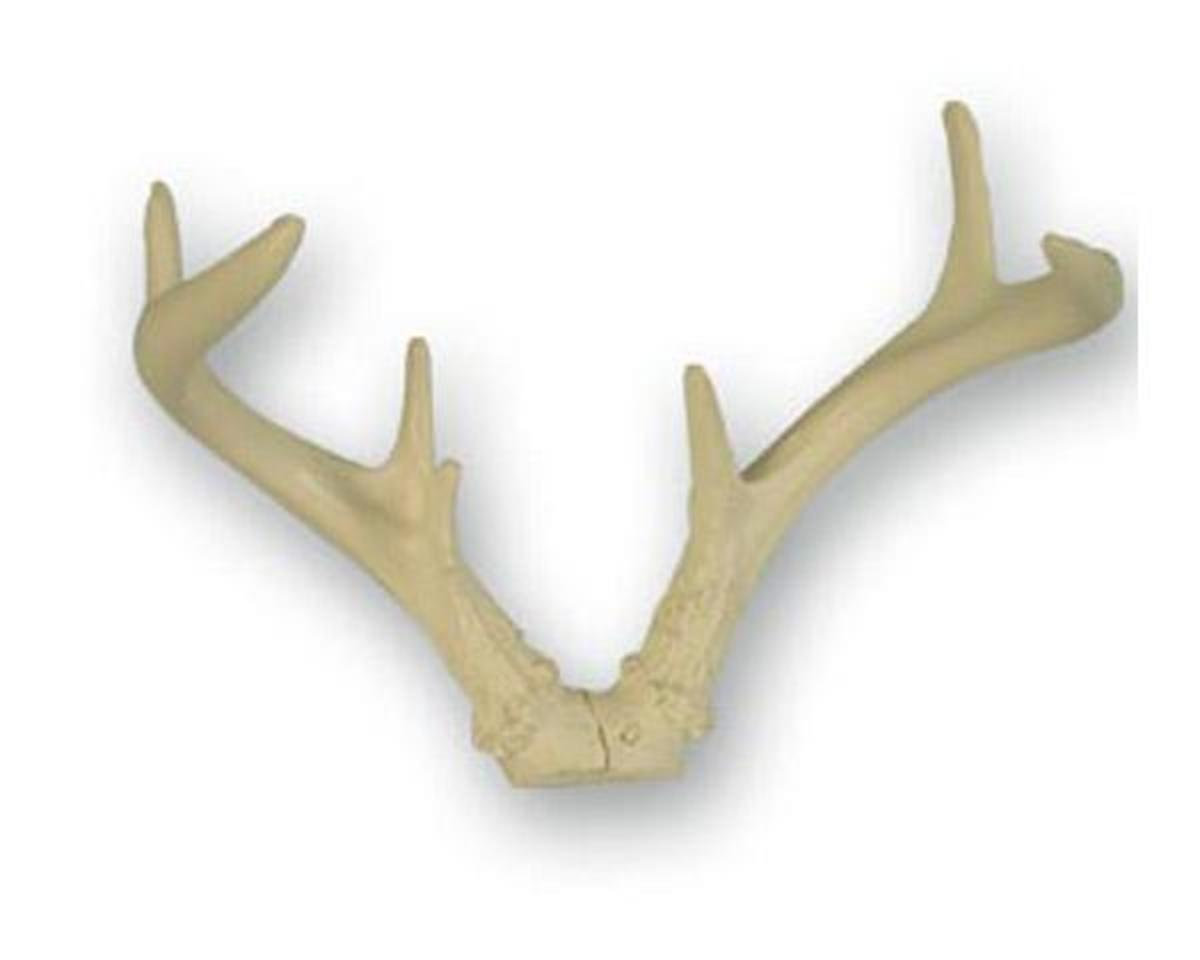 These can be bought at Van Dyke's Taxidermy for $ 24.95 + sf&h