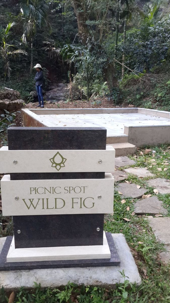 Another picnic spot - Wild Fig