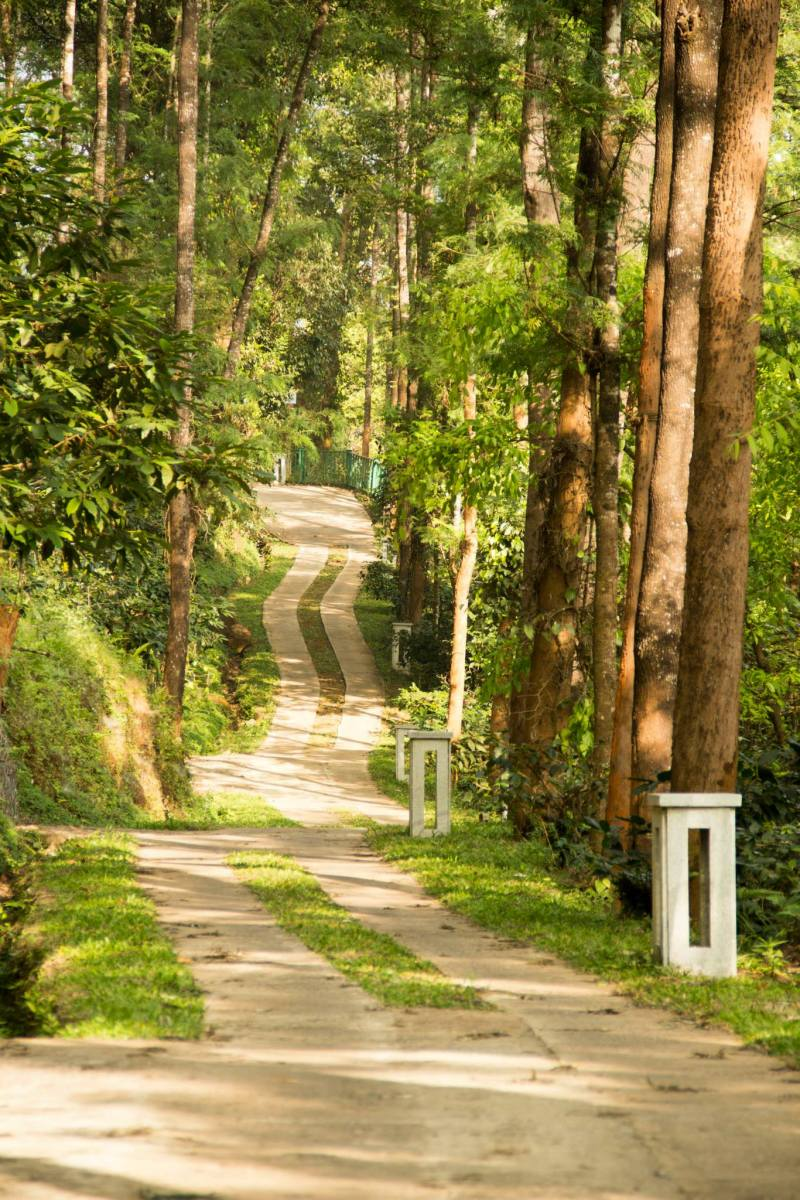 Buggy path meandering along the slopes of the hill leading to each cottages and other amenities