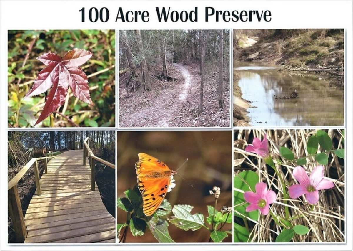 100 Acre Wood Preserve in Houston: Our Discovery and Photographic Journey