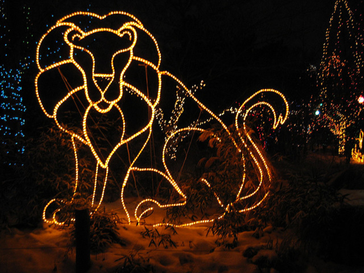 Winter Holidays at Wild Lights With the Columbus Zoo