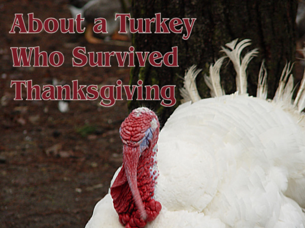 About a turkey who survived thanksgiving