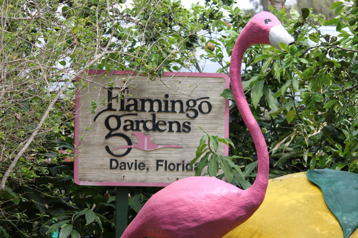 Florida Best Tourist Attractions and Places to Visit: Flamingo Gardens in South Florida Fla