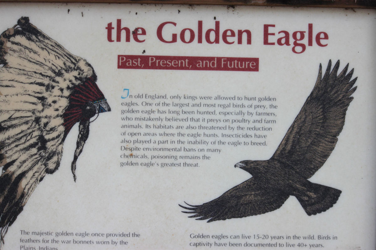 Golden Eagle sign