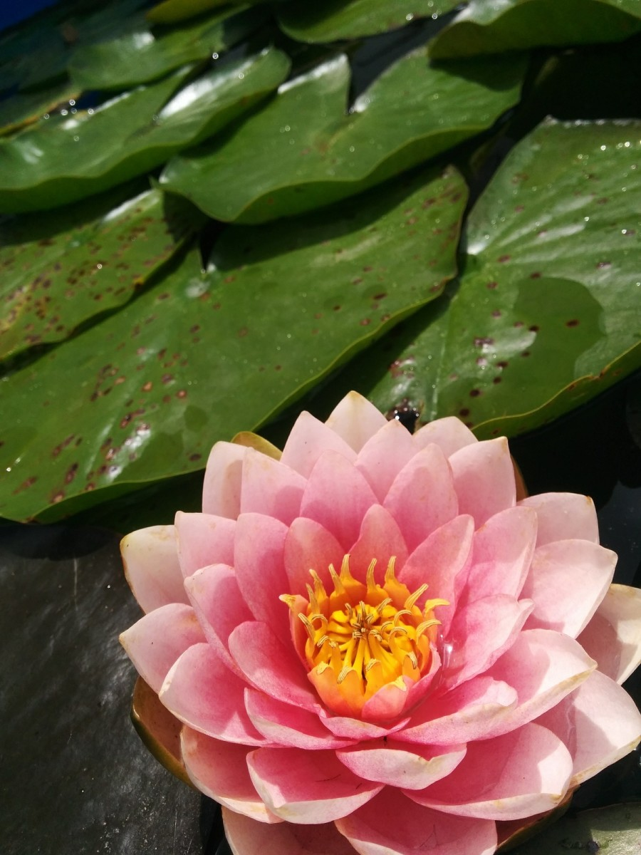 how-to-improve-the-water-quality-in-your-pond