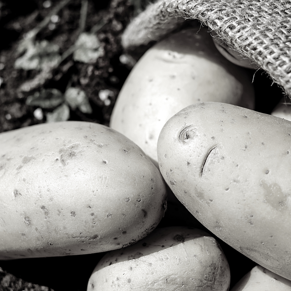potato-an-acrostic-poem