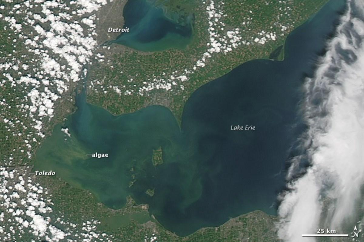 Algal blooms in Lake Erie