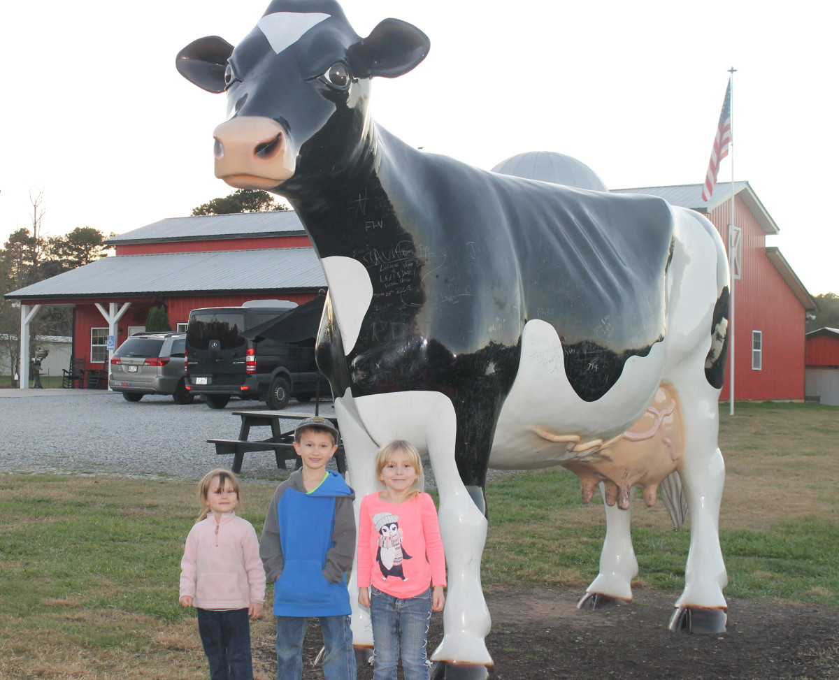 The large cow statue outside Mountain Fresh Dairy