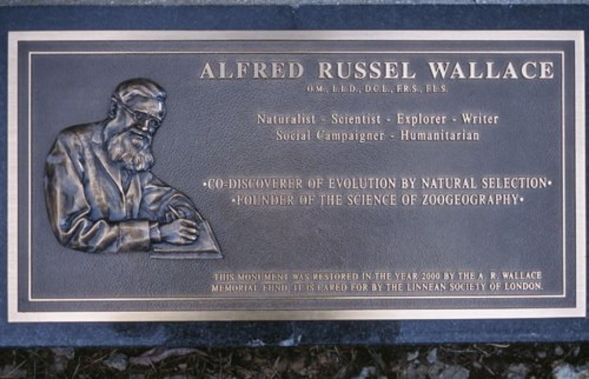 Plaque for Wallace