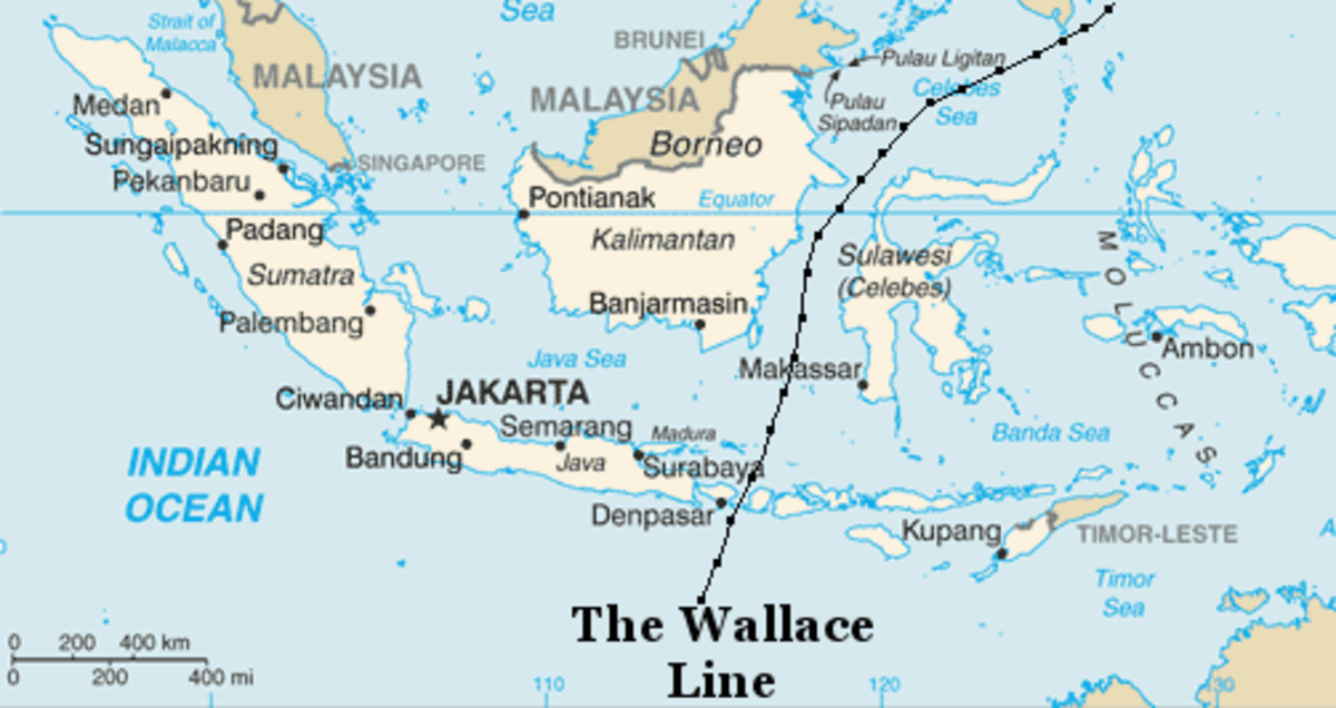 The Wallace Line