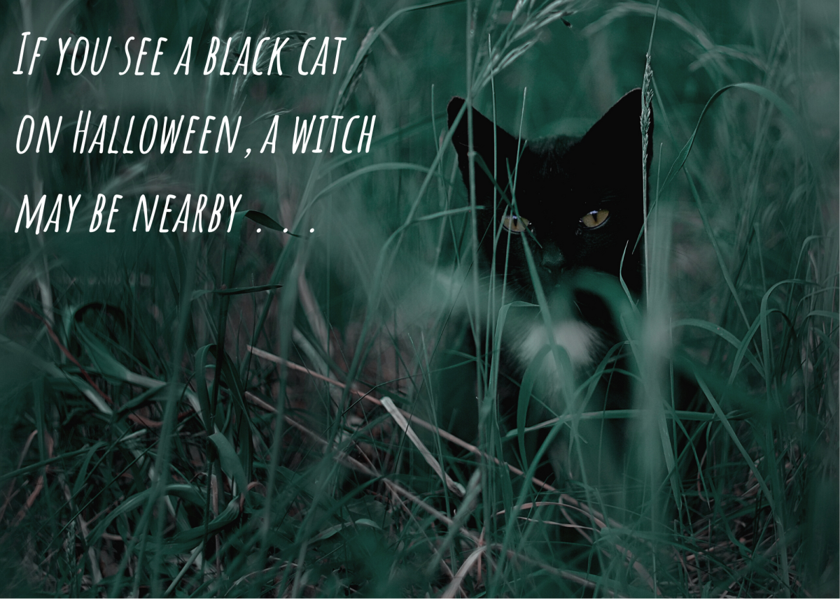 If you see a black cat on Halloween, a witch may be nearby . . .