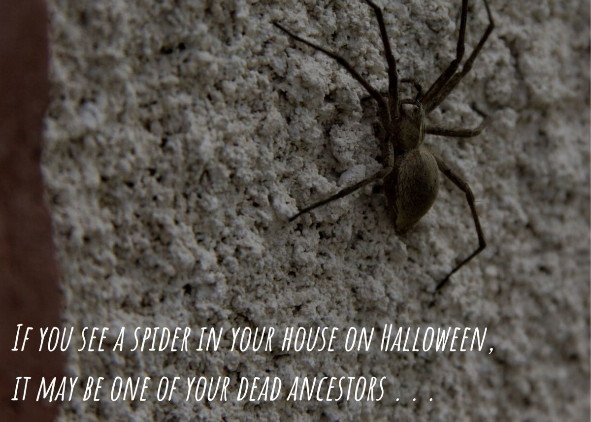 If you see a spider in your house on Halloween, it may be one of your dead ancestors . . .