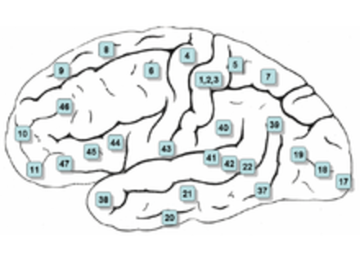 NLP (Neuro Linguistic Programming): Primary Representational Systems