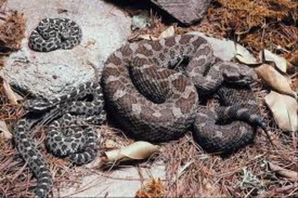 snake-dreams-interpretation-snake-dream-meanings-dream-interpretations