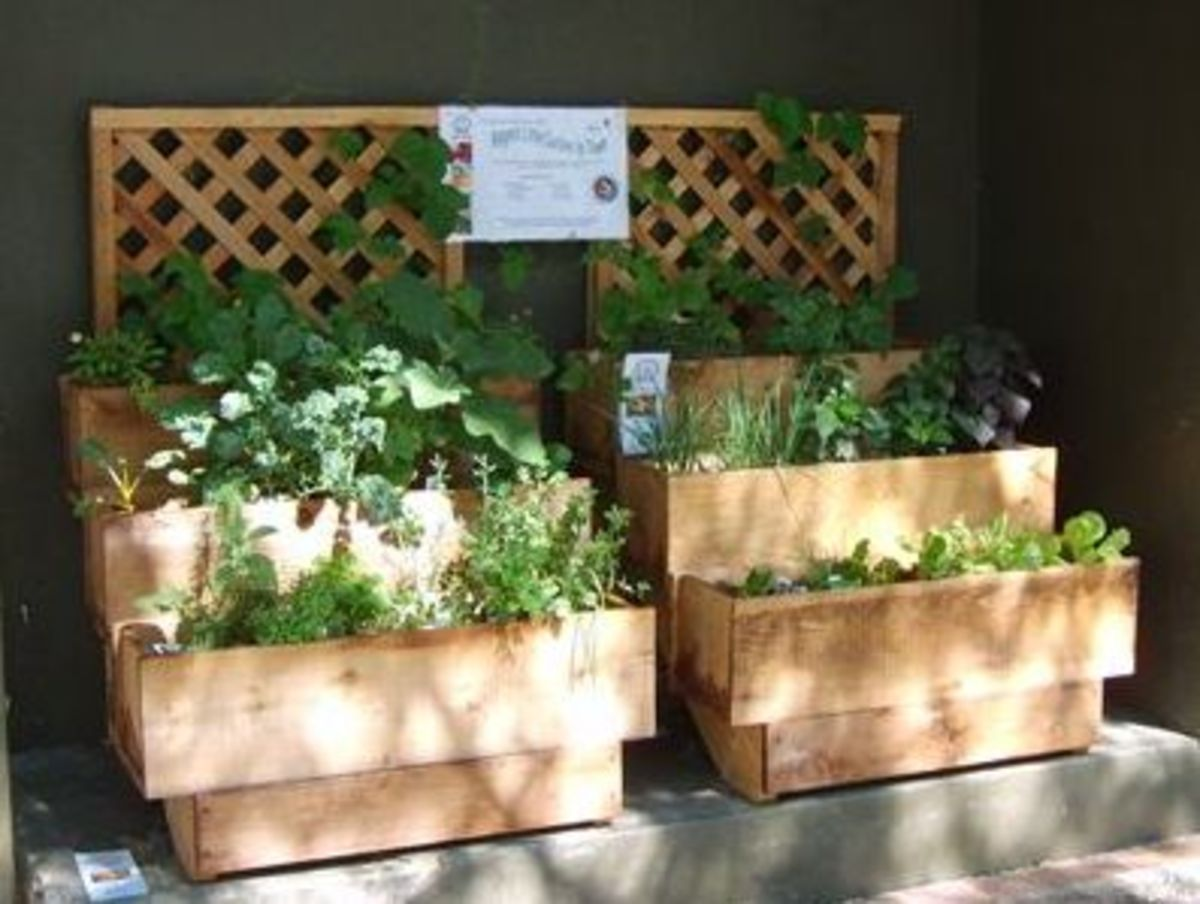 Container vegetable gardening by thomas byers for Balcony herb garden designs containers