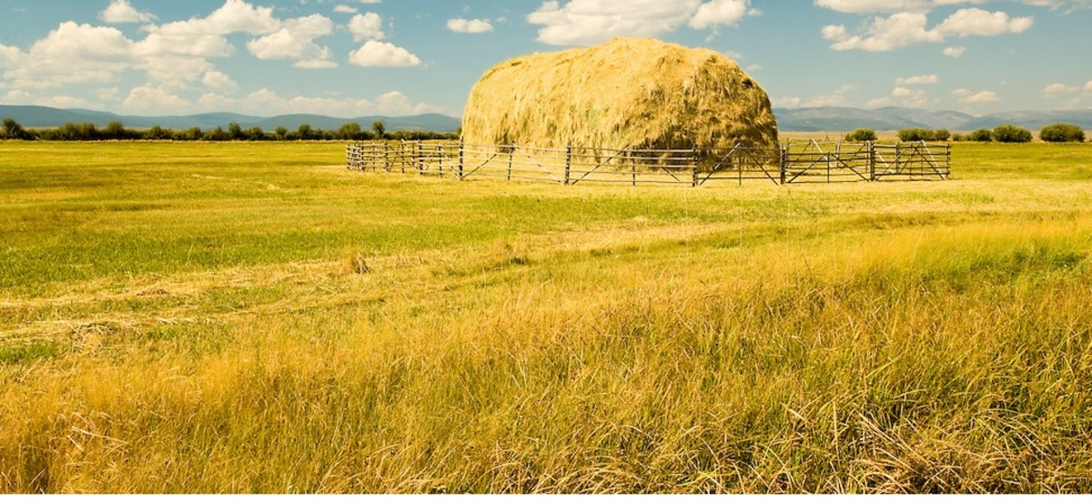 These are the haystacks that I love.
