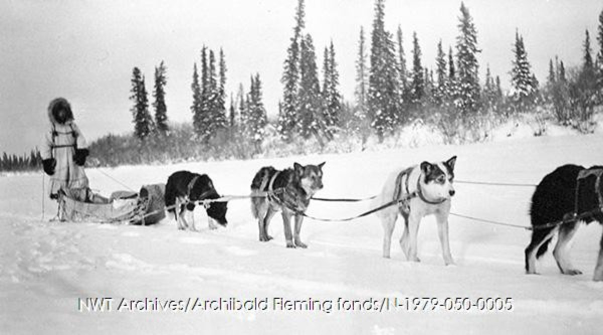 Lucy Nersoo [Nerysoo] with a team of 4 dogs, Aklavik, 1943.