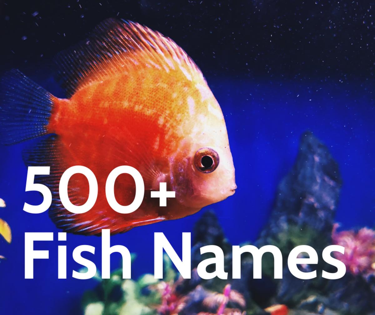 500+ Fish Names