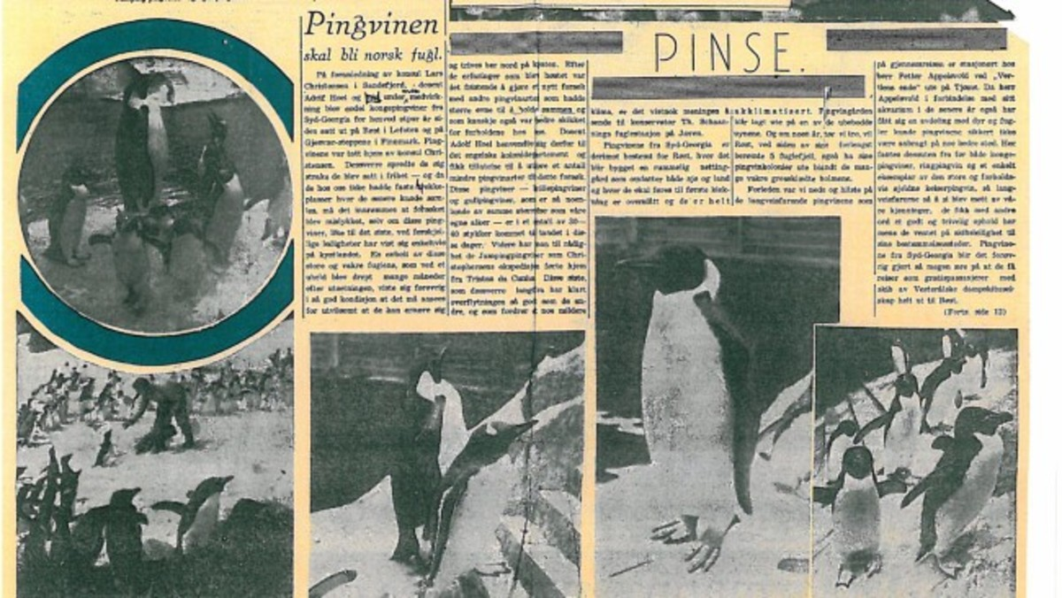 """""""Penguins will be a Norwegian bird"""" according to this article in Tidens tegn, 4 June 1938."""