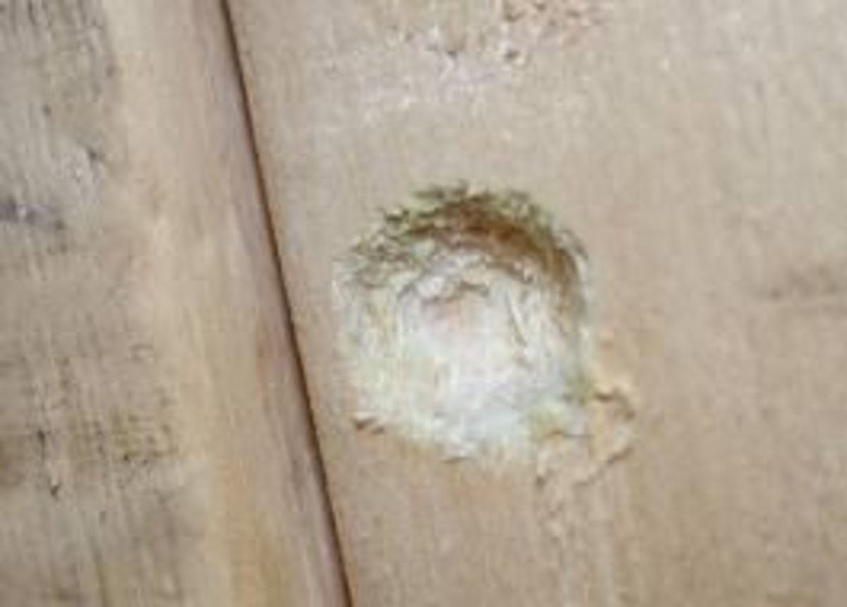 The First Sign of a Carpenter Bee is a Small Hole That Looks Like it Has Been Partially Drilled. Wood Shavings are Usually Prese