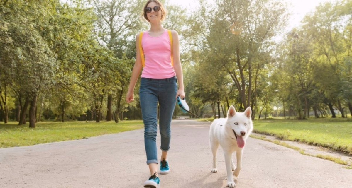 Aways keep your dog on a leash when walking your dog.