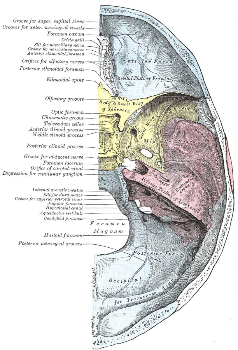 human-anatomy-lesson-14