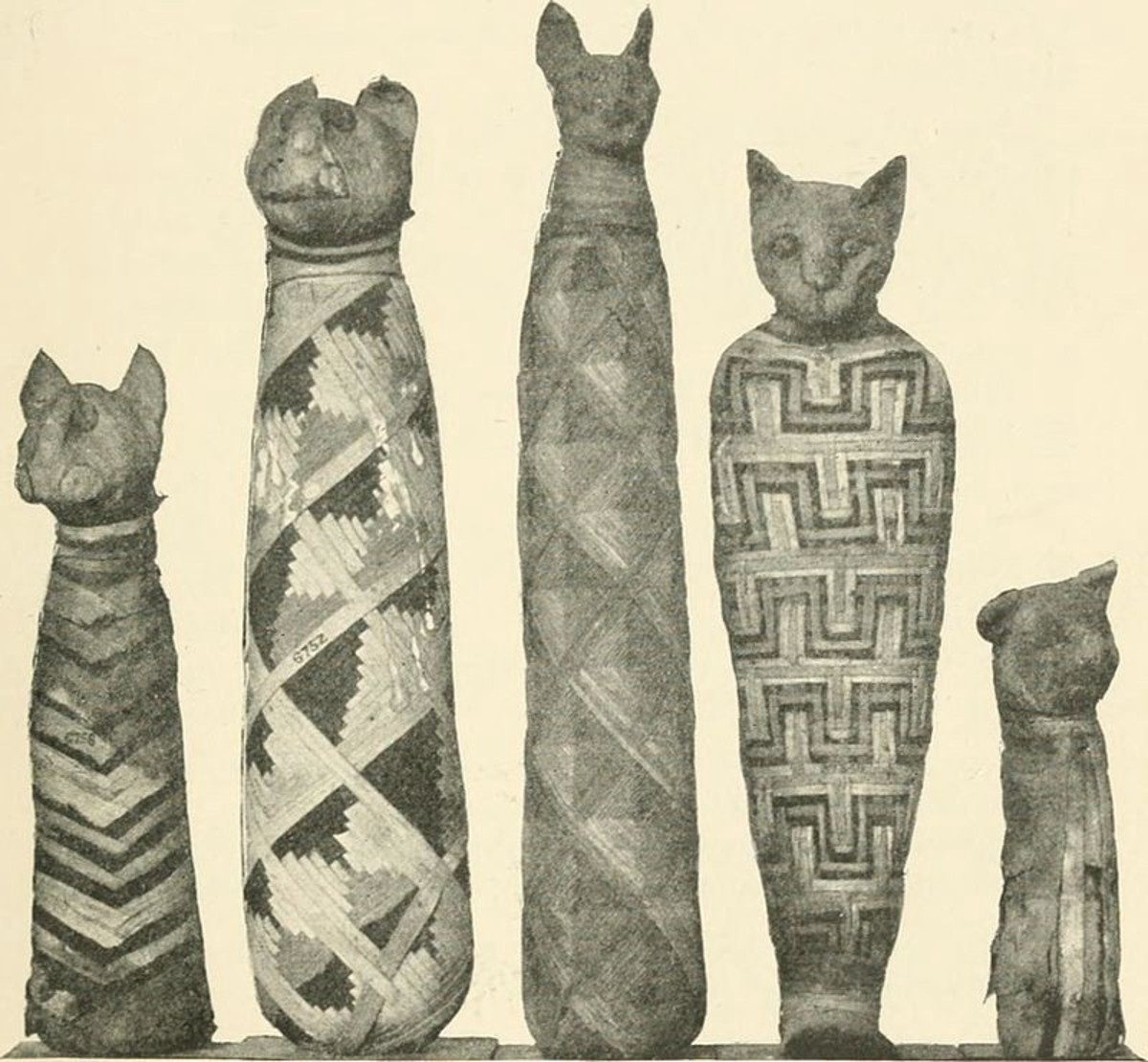 Mummified cats in the Natural History Museum, London