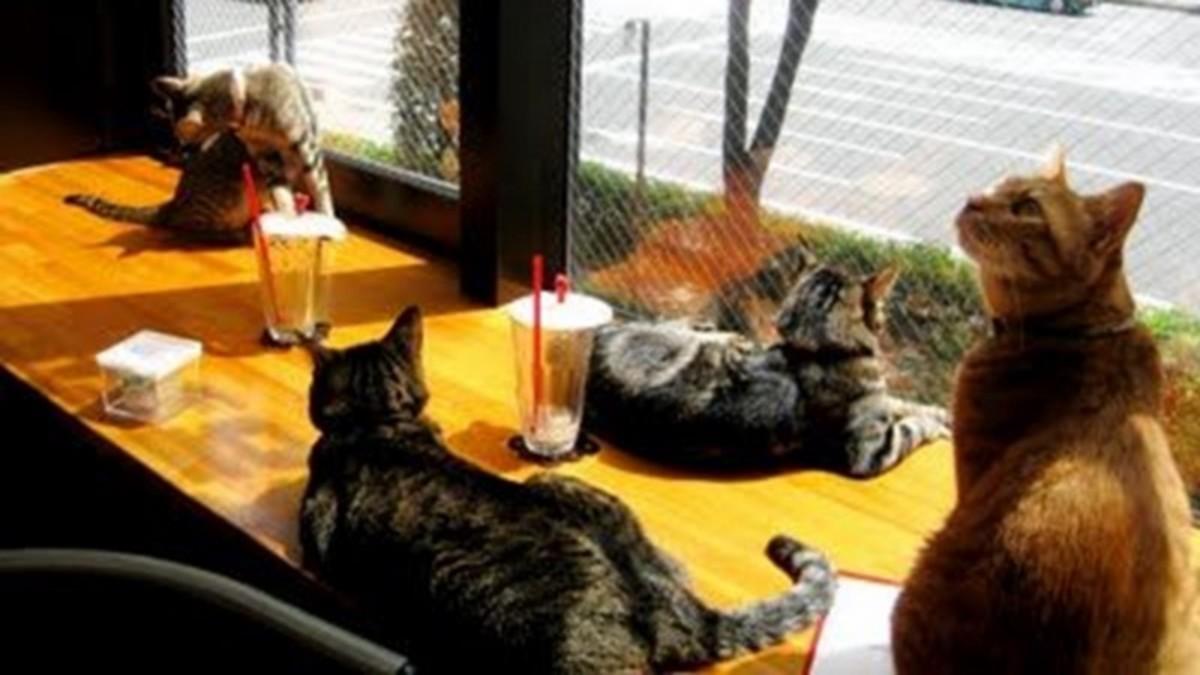 Cat Café Nekokaigi, Tokyo, Japan