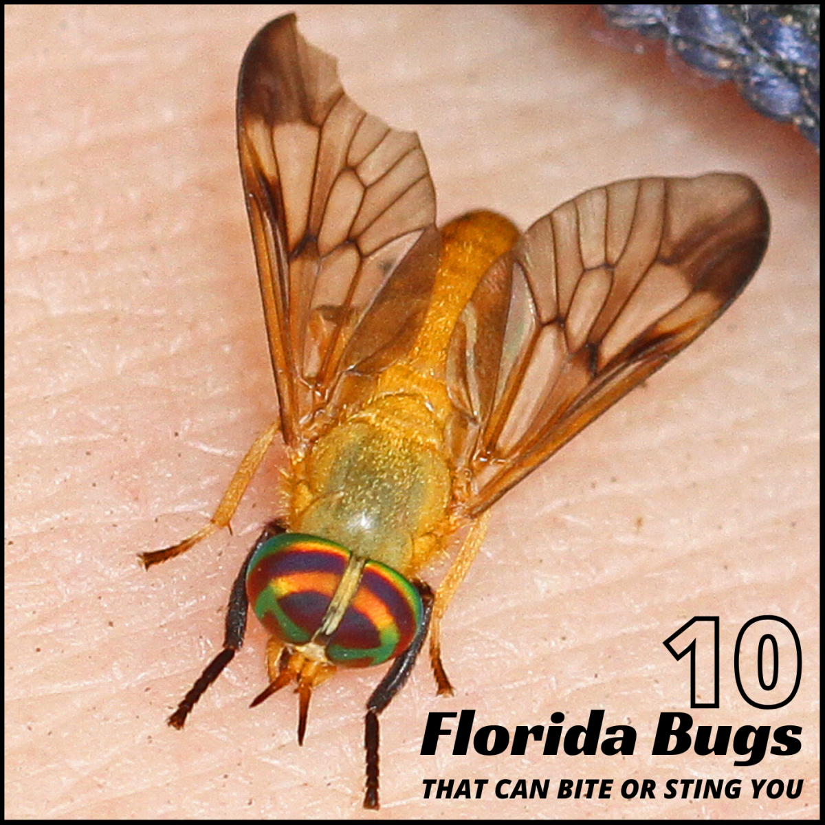 There are many bugs in Florida that can bite or sting you. Read on to find out about 10 of the most common culprits.
