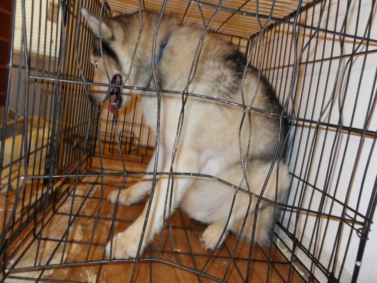 Dog Separation Anxiety Behaviors