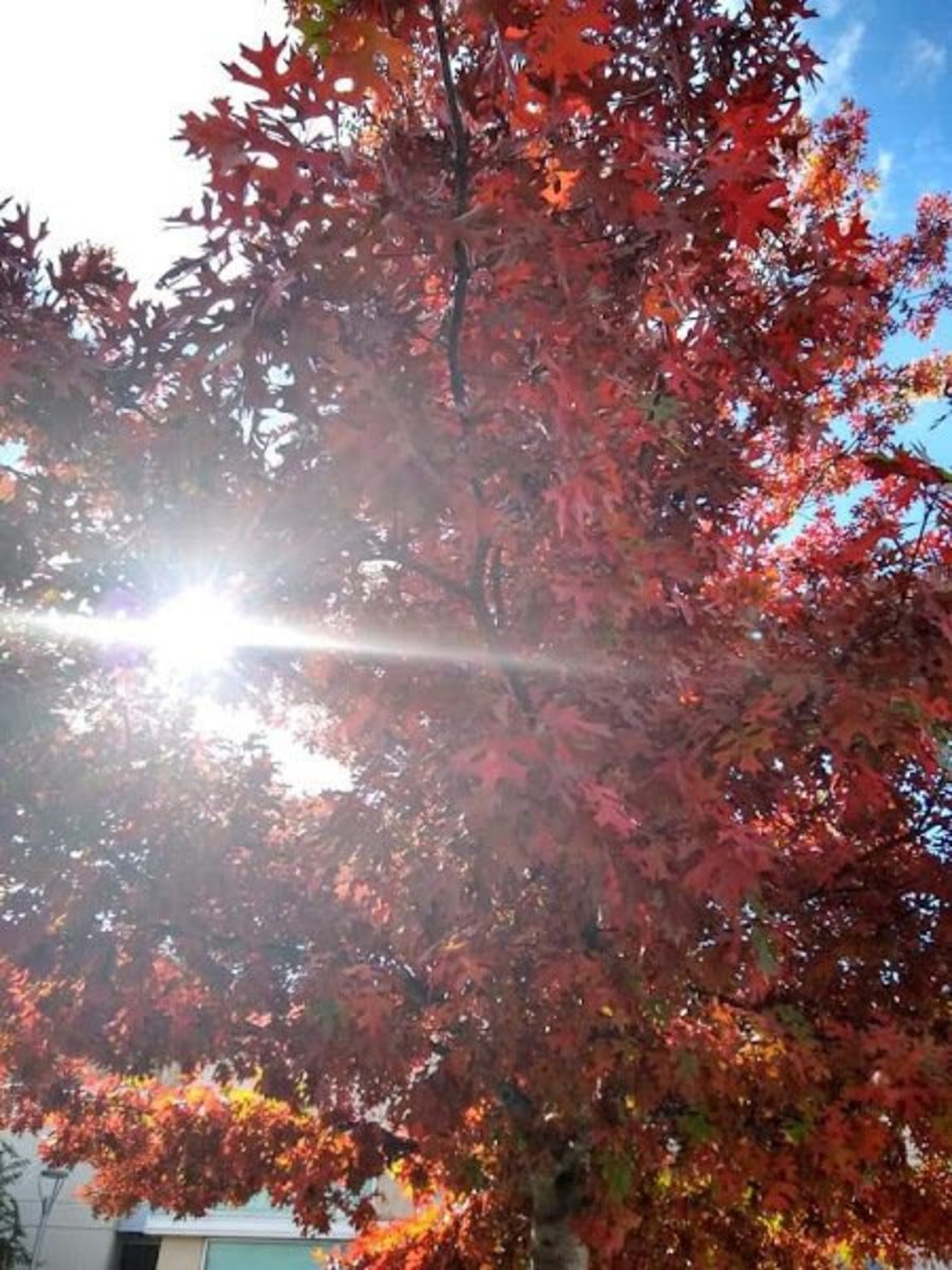 thankfulness-project-fall-leaves