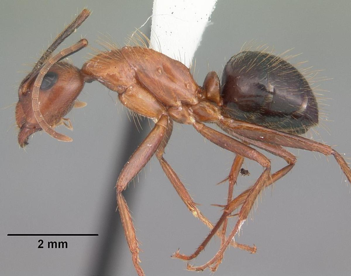 Florida carpenter ant bites do hurt, but they are not as severe as fire ant bites.